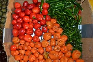 hilo chilis 3
