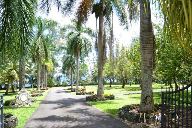 palms driveway